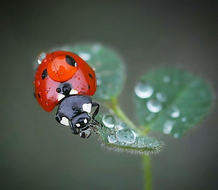 Best lens for insect photography