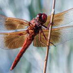 How do you photograph flying insects?