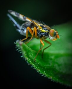 Tokina 100mm F2.8: (Best Sony lens for insect photography)
