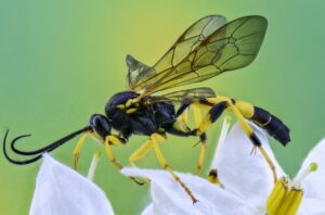 Nikon 60mm F2.8: (Best lens for insect photography Nikon)