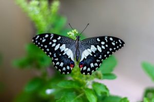 Tamron 150-600mm G2: (Best Nikon lens for butterfly photography)