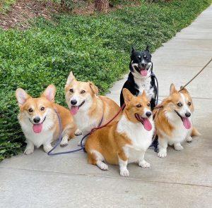 Sigma 24-70mm F2.8: (Best focal length for dog portraits)